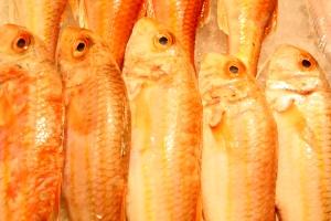 Salmonetes (pescado)