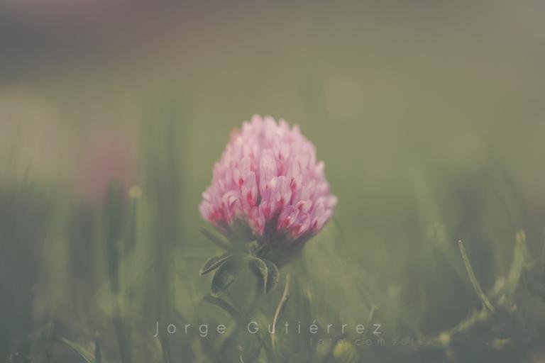 flor4.jpg